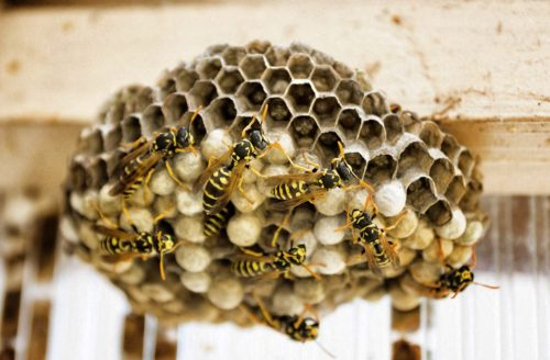 traitement nids de guêpes toulon
